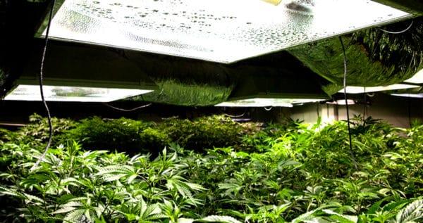 Best marijuana grow lights
