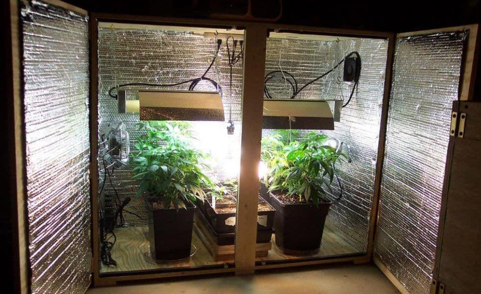 Weed grow box