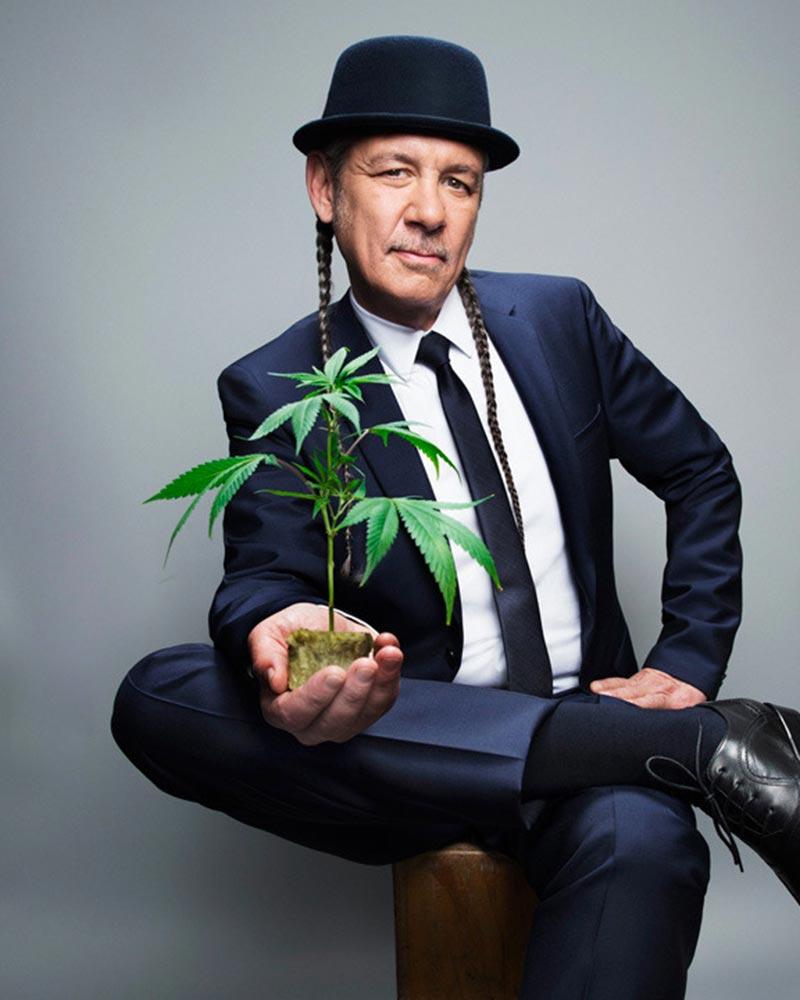 tommy chong marijuana activist