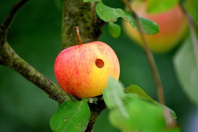 apple-pipe-example