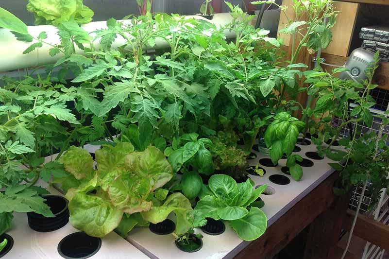 hydroponic grow sytem