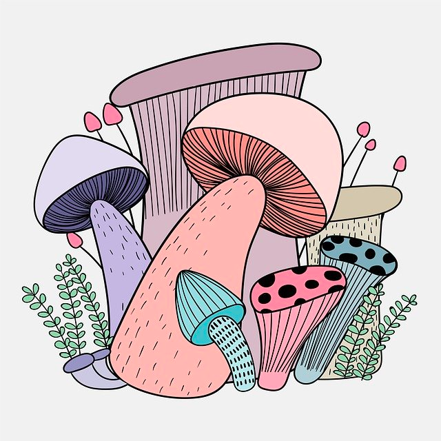 colorful and trippy mushrooms